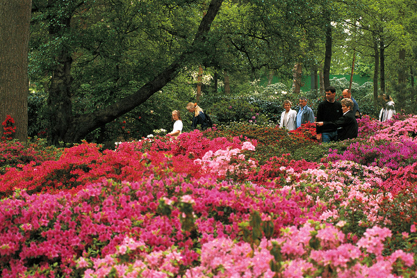 Rhododendron-Park in Bremen, Germany