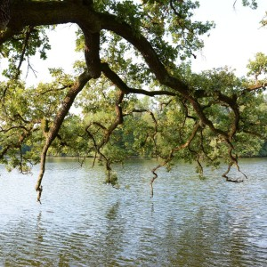 A tree overhangs the water in NymphenburgerSchlossPark in Munich Germany